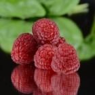 Afvallen met Raspberry Ketones: welk product kies je?