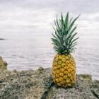 Afvallen met ananas of ananassap