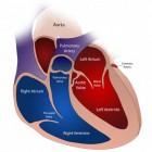 Het principe van de bloedsomloop (hart en vaatstelsel)