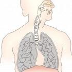Anatomie & fysiologie in 10 stappen – de longen