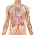 Goed voor de nieren of niet; hoe voorkom je nierschade?