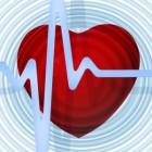 Hart en bloedvaten: functie, werking, ligging en hartslag