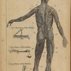 Anatomie & fysiologie in 10 stappen – de huid