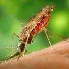 Hoe gevaarlijk is de malariamug en wat kan ik ertegen doen?