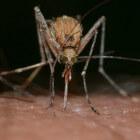 Muggen bestrijden en muggensteken voorkomen