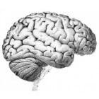 Het Dunning-Krugereffect: zelfoverschatting