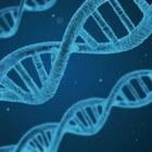 Gezonder leven door senescente cellen tegen te gaan