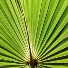 Saw palmetto (zaagpalm): gezondheidsvoordelen & werkzaamheid