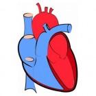 De hartfrequentie