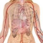Belangrijke feiten over maagzuur, maagzweer, enz