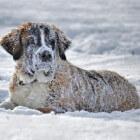 De winterkou in ... voor mens en hond