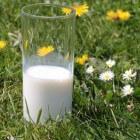 De geneeskracht van biologische melk