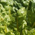 Alternatieve slabladeren voor een originele salade