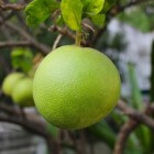 De geneeskracht van citrusfruit