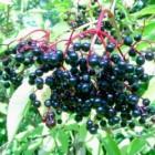 Antioxidanten en veroudering