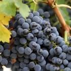 10 diuretische fruitsoorten; wat is vochtafdrijvend fruit?
