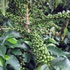 Gezonde dranken: water, thee en koffie
