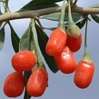De goji-bes, superfood of onzin?