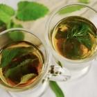 Wat zijn de verschillende theesoorten en hoe gezond is thee?