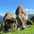 Gezonde melk, Biologisch melk