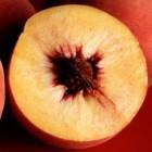 De geneeskracht van perzikenpoeder