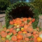 Zijn diepvriesgroenten en diepvriesfruit gezond of ongezond