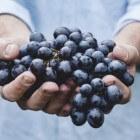 De helende werking van druivenpitten