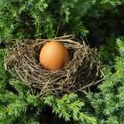 Gezonde eieren: Het verschil tussen eieren