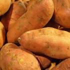 Superfood: de zoete aardappel of bataat