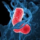 Lactoferrine: ondersteunt darmflora en bestrijdt bacteriën