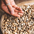 Spelt: Voordelen voor gezondheid van deze graansoort