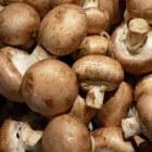 Champignons: Voedingsstoffen en voordelen voor gezondheid