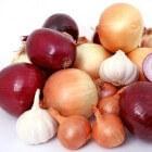 Ui (ajuin): Voordelen voor gezondheid en risico's van uien