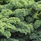 Boerenkool: Voordelen voor gezondheid van deze groente