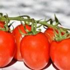Tomaten: Voordelen voor gezondheid van de groente tomaat