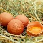 Eieren: Voordelen voor gezondheid van consumptie van ei