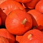 Pompoenen: Voordelen voor gezondheid van vrucht pompoen