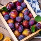 Pruimen: Voordelen voor gezondheid van deze vruchten