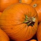 Pompoen: gezondheidsvoordelen & voedingsstoffen in pompoenen
