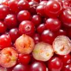Cranberry: gezondheidsvoordelen & voedingswaarde cranberry's
