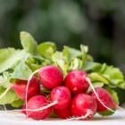 Radijs: gezondheidsvoordelen en voedingsstoffen in radijzen
