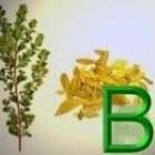 Geneeskrachtige Gezonde Kruiden B