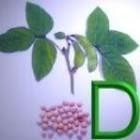 Geneeskrachtige Gezonde Kruiden D