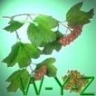 Geneeskrachtige Gezonde Kruiden W - Y - Z