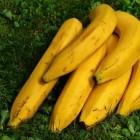 Bananen, zijn ze gezond en hebben we ze nodig?
