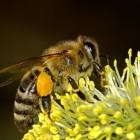 Honing als geneesmiddel
