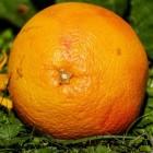 De geneeskracht van grapefruit