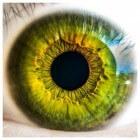 Hoe wordt licht in het oog vertaald naar een beeld?