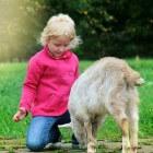 De cognitieve ontwikkeling van een kind