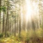 De betekenis van licht voor de mens